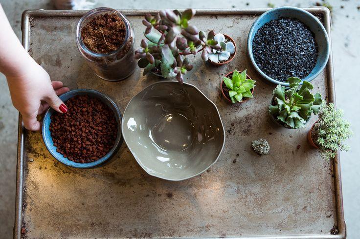 5 inspiring easy diy indoor gardens succulent soil for Soil for succulents