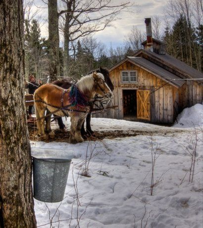 Sugaring; by Jerry Lasky.  (Beautiful, peaceful feelings come to mind looking at this!)