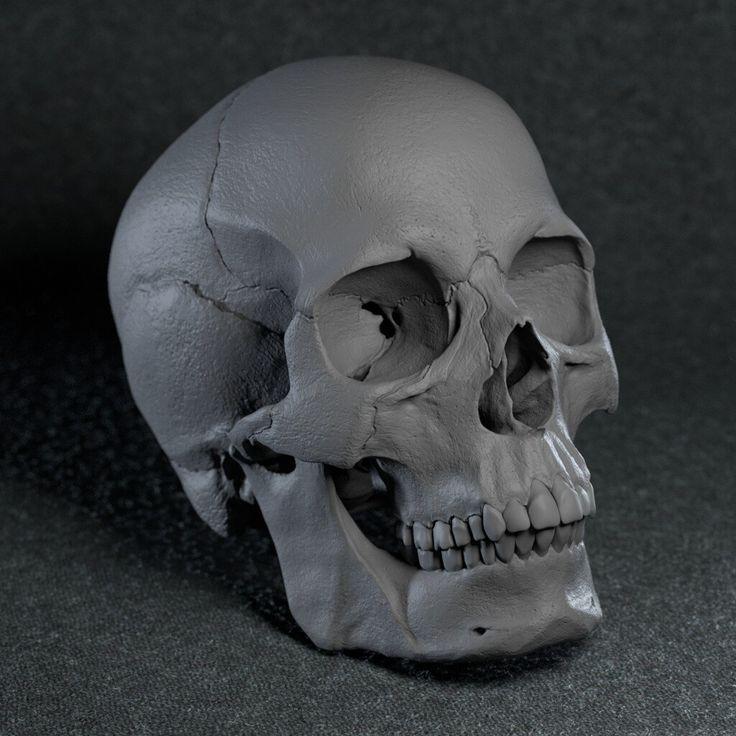 голубых картинки анатомический черепа часть будет посвящена