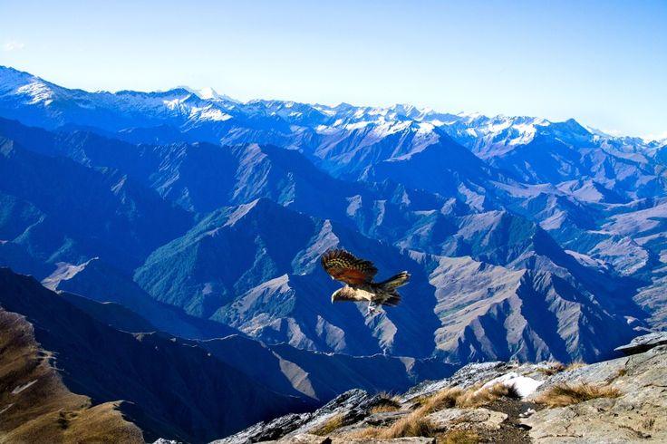 New Zealand travel Ben Lomond summit