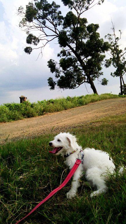 Elimina el olor a orina de perro naturalmente ¡Por fin, un truco ecológico y sencillo!