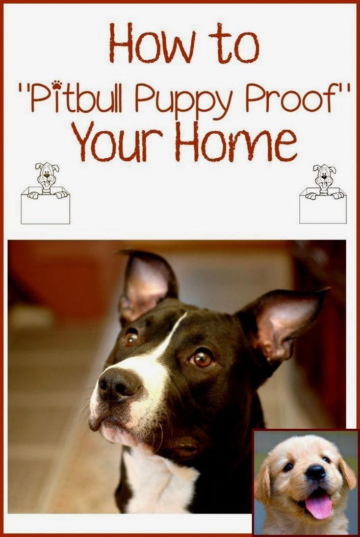 If You Can Teach Your Pet Dog These Fundamental Abilities And