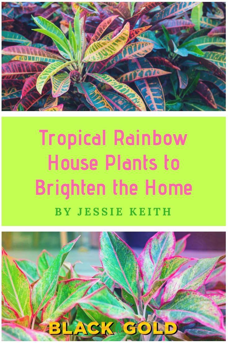 Tropical Rainbow House Plants Plants Rainbow House House Plants