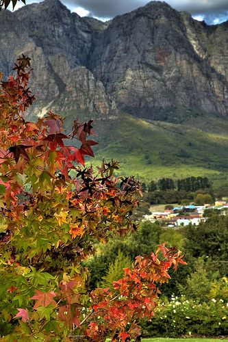 Picture Perfect Autumn, Hillcrest Berry Farm, Cape Town, South Africa