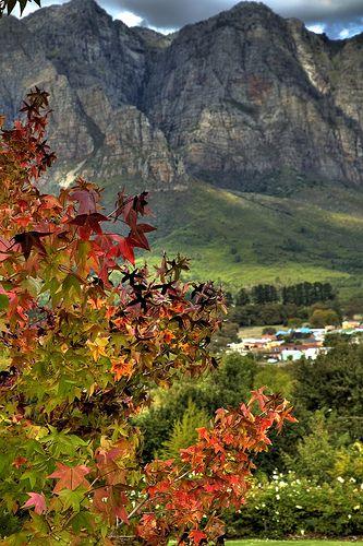 Picture Perfect Autumn, Hillcrest Berry Farm, Cape Town, South Africa