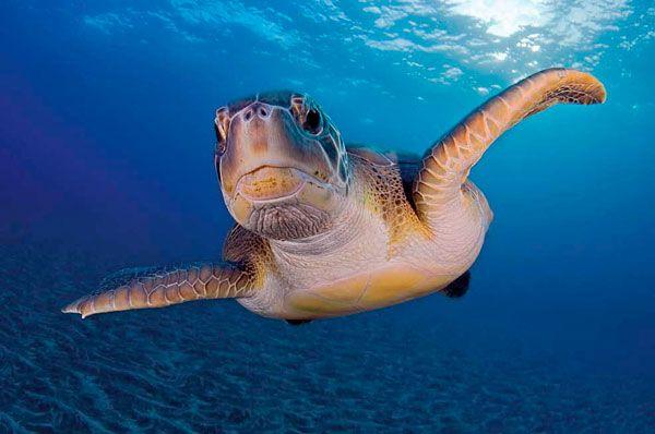 Hola, soy una tortuga ;)