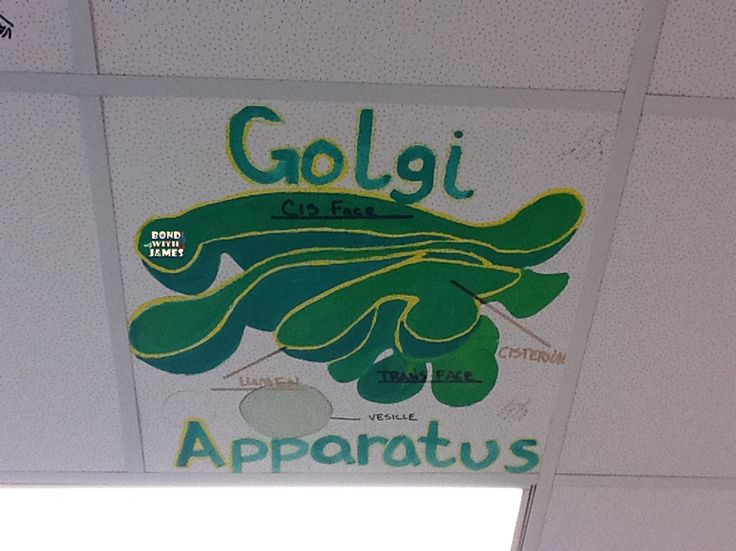 Artistic Classroom Ceilings