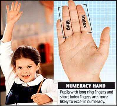 About 'Digit Ratio' – a.k.a. 'Finger Length Ratio' (2D:4D) « Finger length & DIGIT RATIO hand news!
