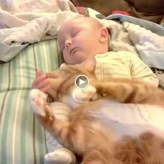 ***MUST WATCH VIDEO*** Cats and kids. So adorable.
