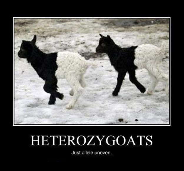 Gregor Mendel approves this pun: | Community Post: 20 More Spectacularly Nerdy Science Jokes