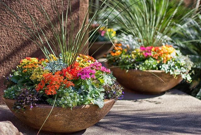 Container with focal in center.: Plants Can, Gardens Flowers, Fall Flowers, Color, Pools Decks, Fall Pots, Flowers Pereni, Pots Flowers,  Flowerpot
