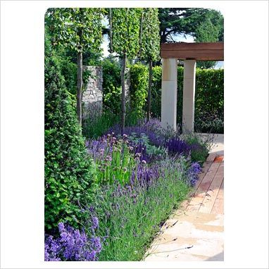 The blue border in 'The Italian Job' garden, Hampton Court Palace Flower Show 2012