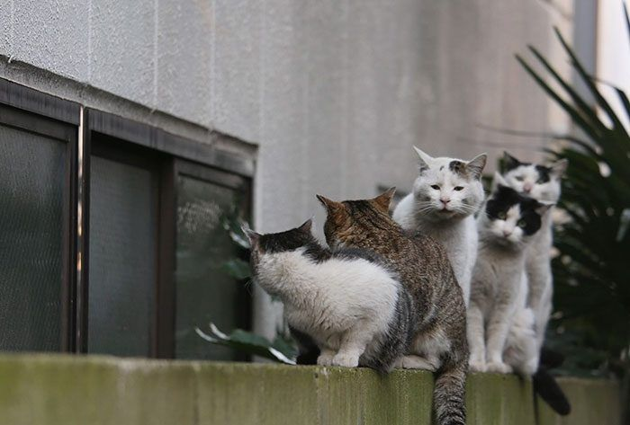 Бездомные коты на улицах Токио