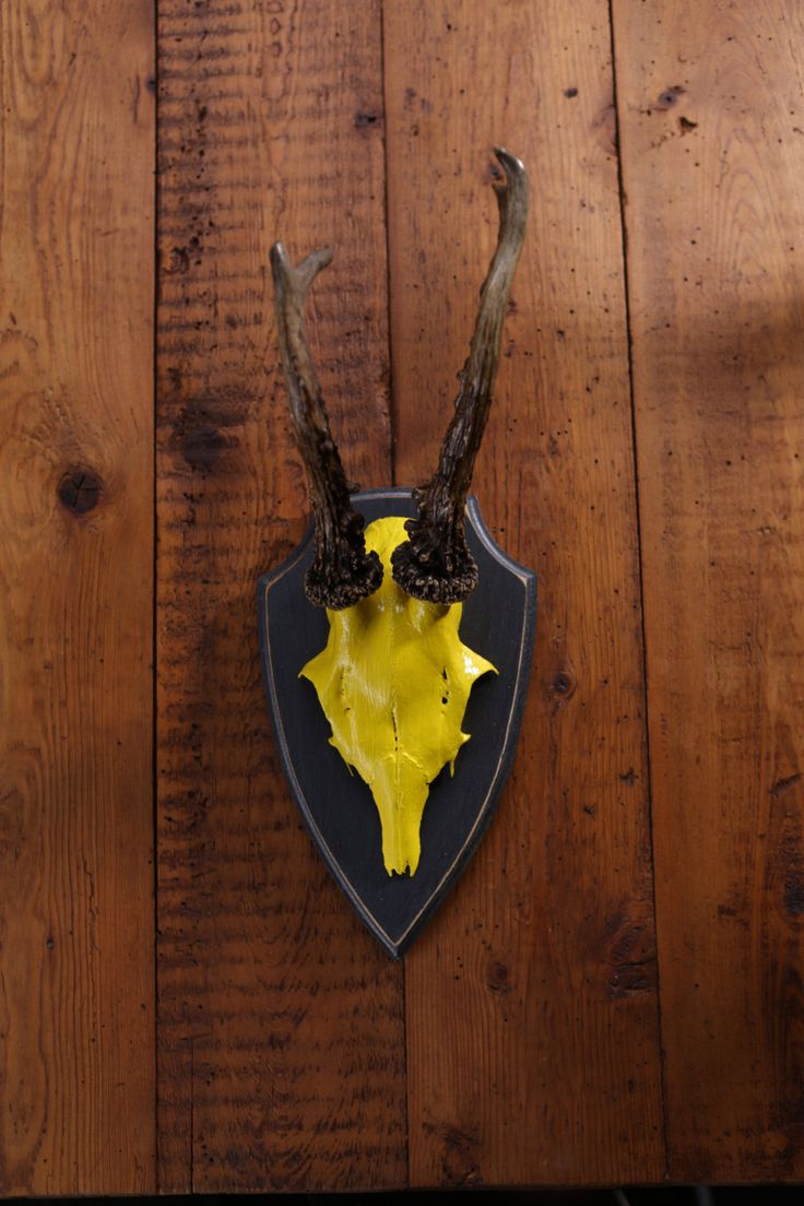 """Stylish wall sculpture, deer antler with scull, deer scull, deer mount, wall decoration, antler hook, antlers, Theodore"""" von ZWDesign auf Etsy"""