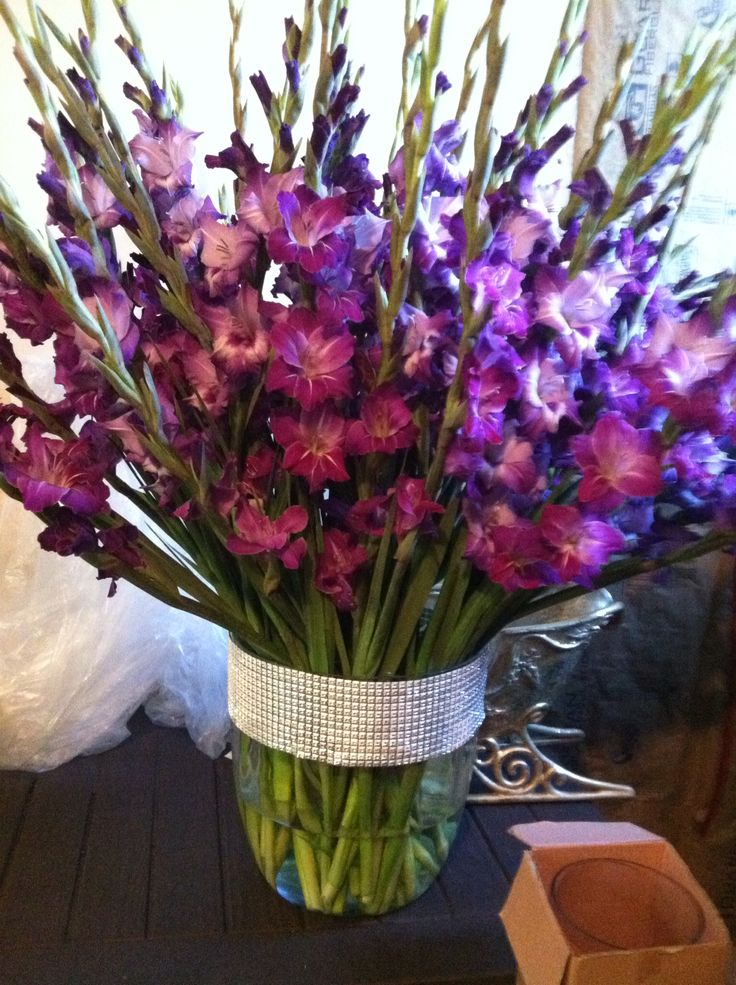 Best images about 글라디올러스 on pinterest gladiolus