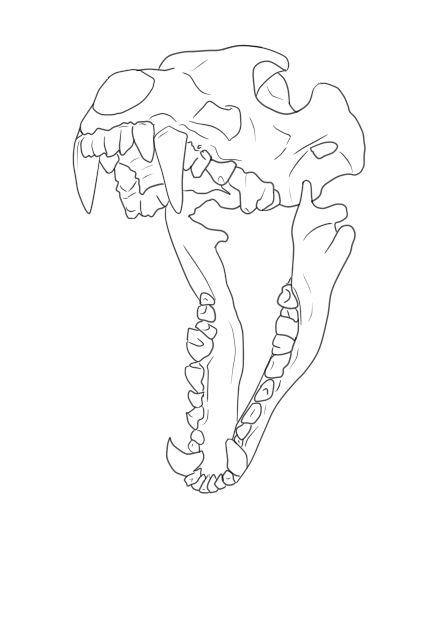 Wolf Skull LineArt Free by Blue-Rakuen