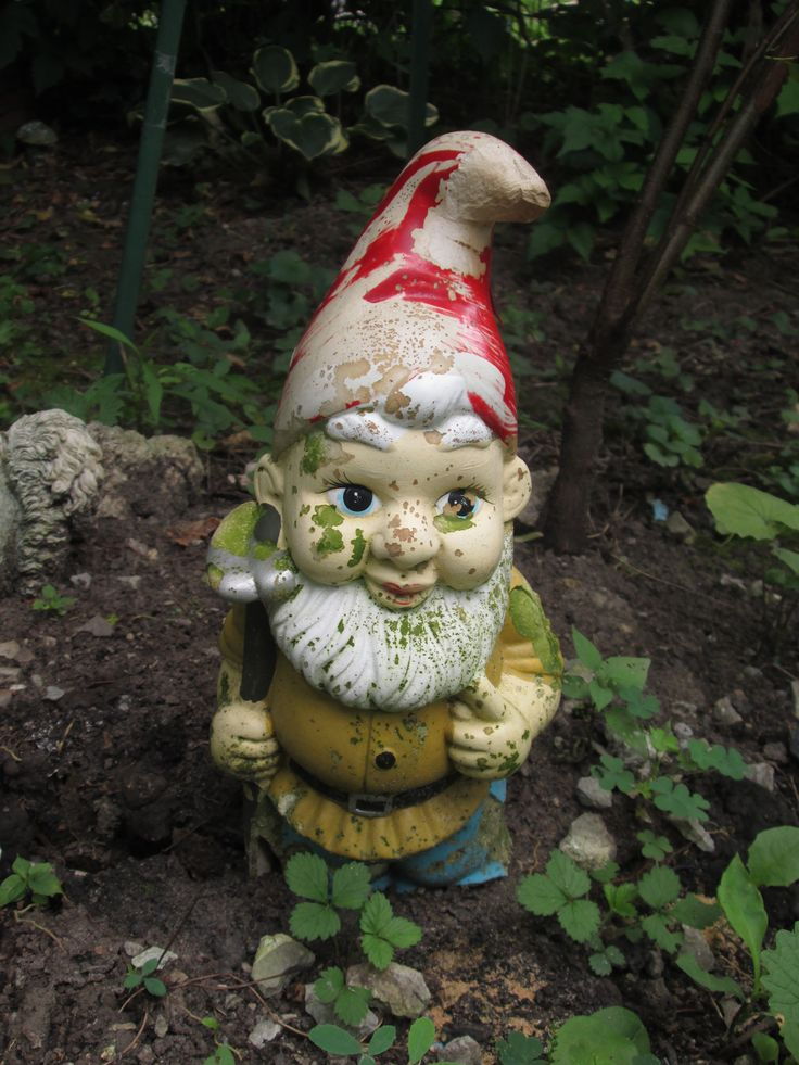 Gnome In Garden: 17 Best Images About Garden Gnomes On Pinterest