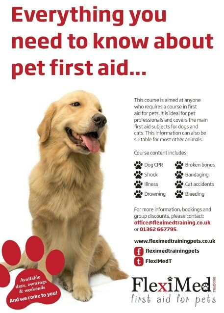 Pet first aid in norfolk