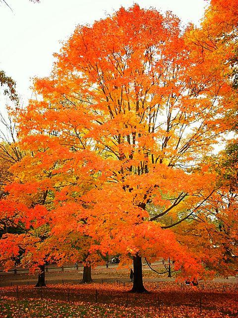 Central Park, New York City - Kijk voor leuke vuurkorven, trendy vuurschalen, goedkope terrashaarden of populaire Zweedse fakkels op www.zweedsefakkelonline.nl of www.vuurkorfwinkel.nl