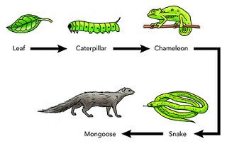 food_chain_flickr.jpg (320×206)