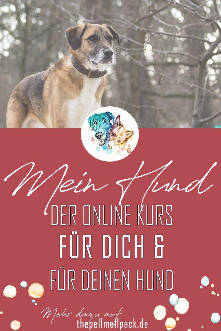 Der Online Kurs zu allen Themen eines Hundelebens | Hund | Gesundheit | Ernährung | Pflege | Fotografie | DIY | Physiotherapie | Reisen | Erziehung | Tricks | thepellmellpack.de #hundeerziehung #hundefutter #hundegesundheit #hundeverhalten #hundabwechslung