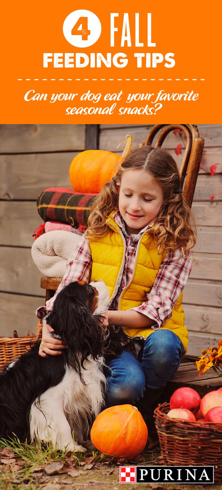 """When you think autumn, which foods come to mind? Pumpkins, sweet potatoes and nuts are key ingredients in some of our favorite holiday meals. But are these foods appropriate for all members of the family – even furry ones? If you're wondering, """"can my dog eat that?"""" read more as Purina Veterinarians reveal little-known facts about these favorite fall foods including pumpkin, sweet potatoes and nuts. See guidelines for feeding some human snacks to your dogs."""