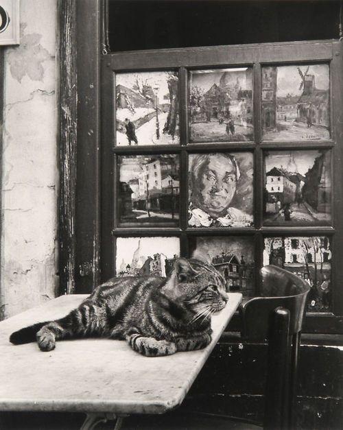 """Izis Bidermanas """"Bar Eugene, place du."""" (cat), 1949;"""