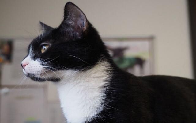 Adorable Cats Rescued From Life In Labs Need Your Help Cute