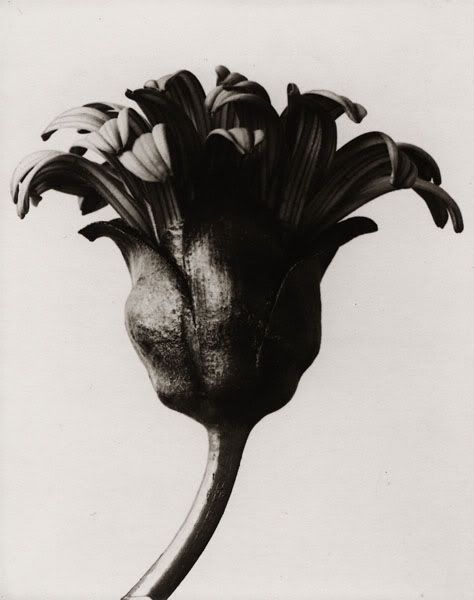 """Edward Henry Weston (March 24, 1886 – January 1, 1958) was a 20th-century American photographer. He has been called """"one of the most innovative and influential American photographers…""""[1] and """"one of the masters of 20th century photography."""""""