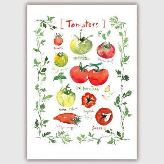Tomato print, Heirloom tomatoes, Kitchen gift, Vegetable poster, Kitchen print…