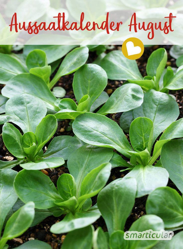 Aussaatkalender für August: Diese Gemüse, Kräuter und Blumen jetzt säen  – Selber machen statt kaufen – Garten und Balkon