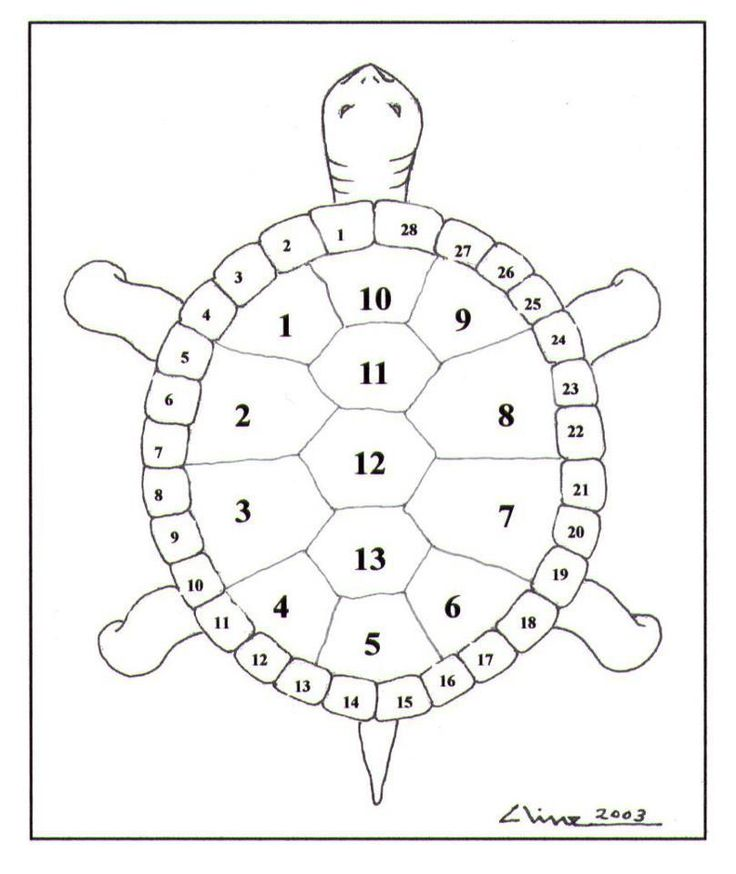 The Turtle Amp The Human Body Is A 13 Moon Amp 28 Day Calendar