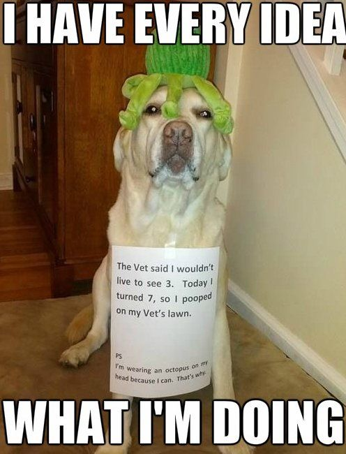 Pet Memes Funny Dogs Funny Dog Pictures Dog Memes