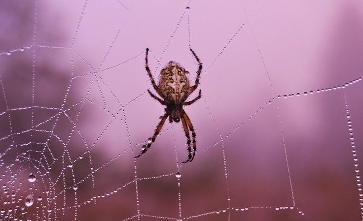 itsy bitsy spider - at Lesul Ursului - Valea     Iadului
