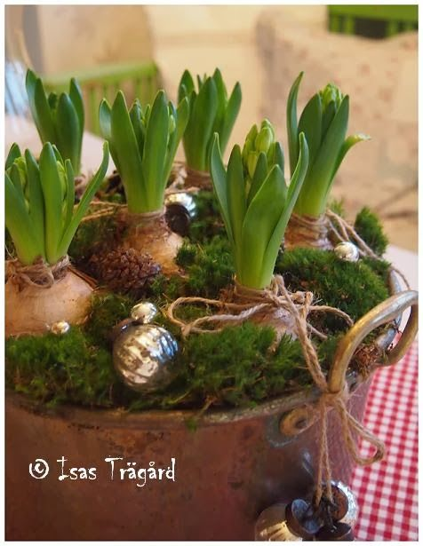 Isa's Garden Hyacinthus. Vintage balls, cones, greens and twine.