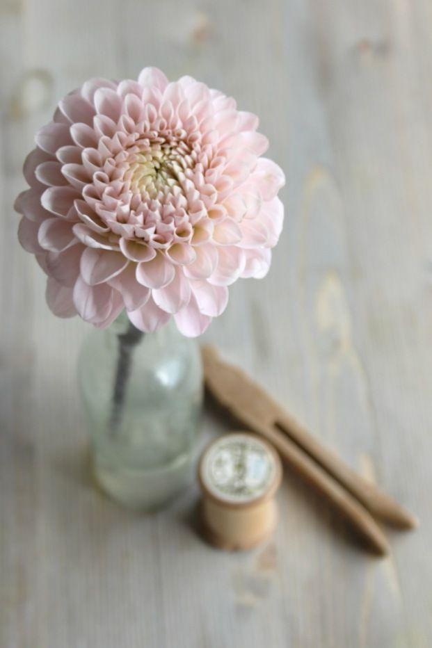 La mariée aux pieds nus > calendrier des fleurs  Dahlia en juillet