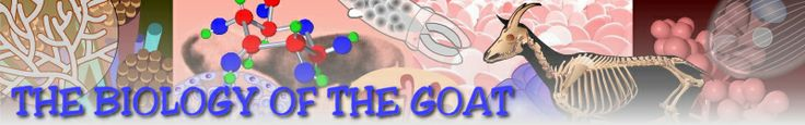 Terrific resource on goat biology - from http://www.goatbiology.com/index.html