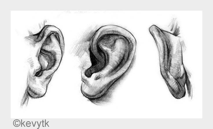 #earweek is up and todays #tutorial is from kevytk. It´s a rather quick one but it offers more than one #perspective which i think is the real #challenge most of the time. I´m extremely #busy the last couple of days so ineed to catch up myself but i can really see some more effectiveness in my pieces already. Come along and let´s #learnTogether you can still join #facialFeatureMonth