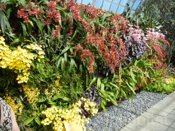 Jardim Vertical: Living Wall, 7 000 Orchids, Green Wall, Vertical Gardens, Big, Garden S Orchid