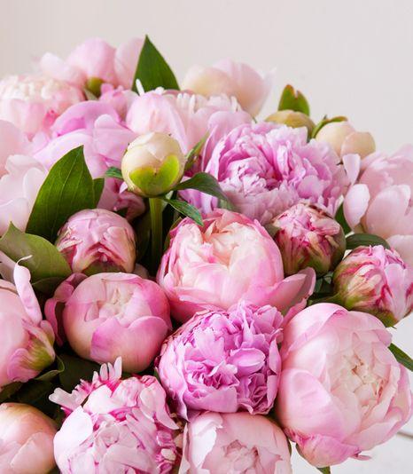 Peoner på sitt vakreste - akkurat nå! - Interflora blomster - Tips en venn