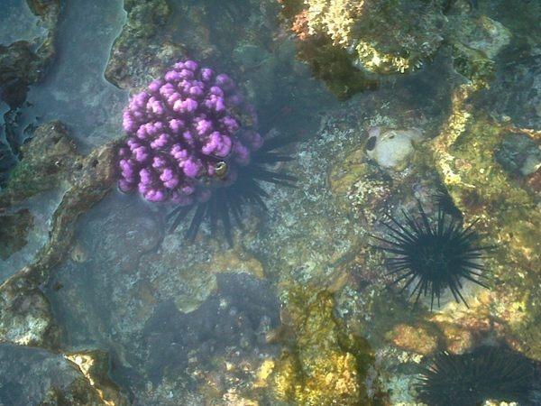 """@blontankpoer: temukan keindahan di sela-sela pantai karang di Serau, Pacitan. airnya jerniiih!"""""""