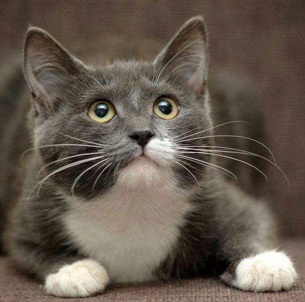 grey kitten wallpaper 294 - photo #23