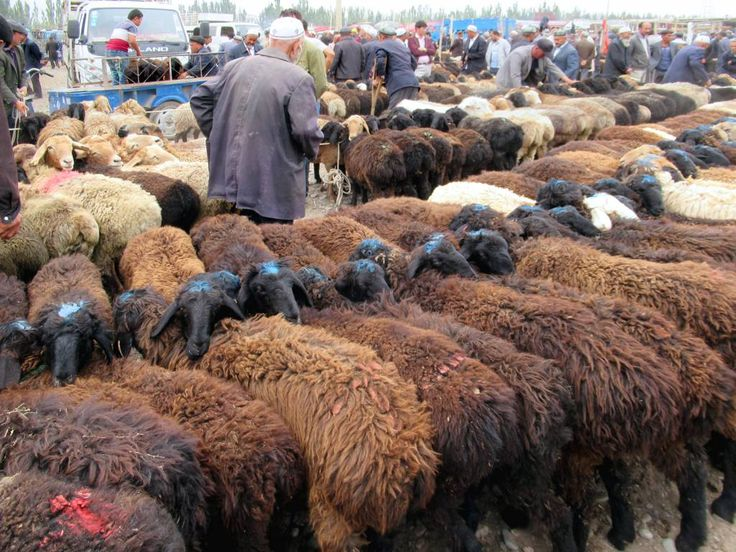 Rows of docile sheep await sale and slaughter at the Sunday livestock market in a suburb northwest of Kashgar, Xinjiang, China.