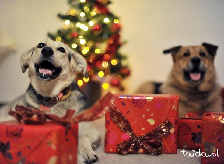 Tośka i Krokiet pod choinką  Toska and Krokiet under the Christmas tree