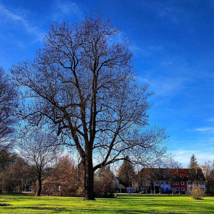 So ein schöner Tag ... #muc #herbst