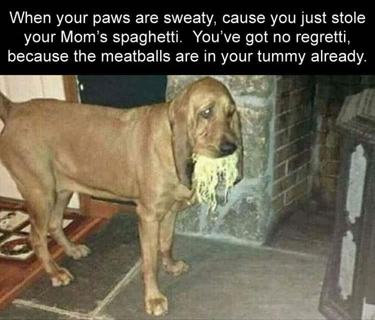 31 Funny Pics for Your Friday | First Edition
