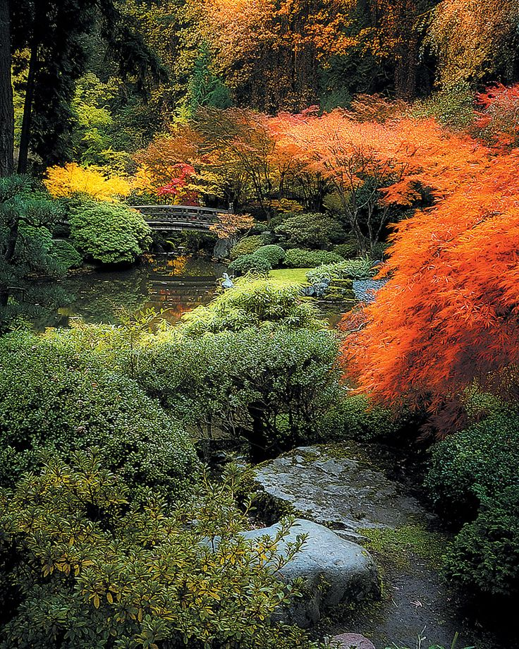 28 Japanese Garden Design Ideas To Style Up Your Backyard: 28 Best Japanese Maples Images On Pinterest