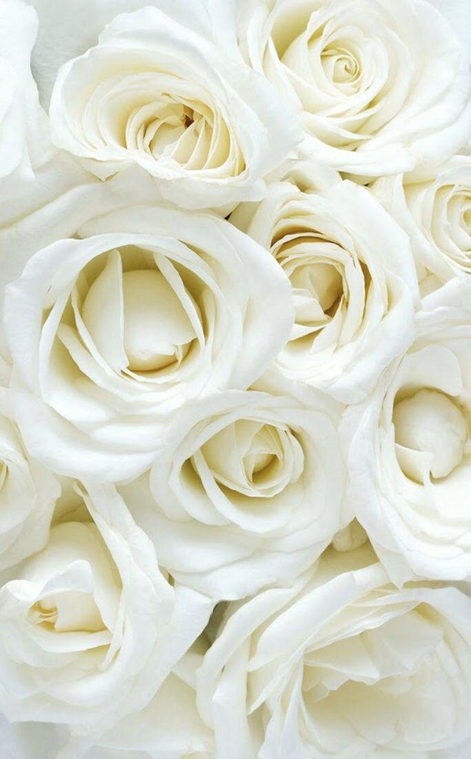 Fleurs En 2020 Fond D Ecran Fleur Blanche Rose Blanche Fond Ecran Rose
