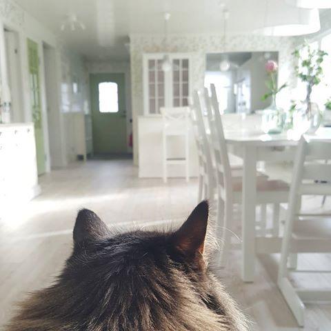 Haft en ljuvlig semester! ☉ Men oj för att sätta sig hemma i tantsoffan med en spinnande katt i knäet och bara vara. 💛 #vitrinskåp #spröjs #hemljuvahem #köksö #köksbord