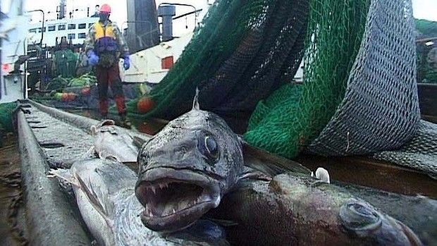 Sea Shepherd to hunt toothfish poachers in Antarctic